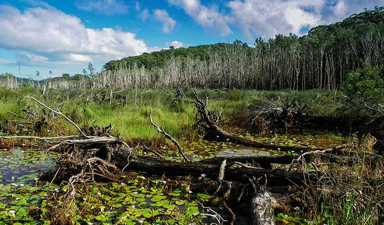 Cudgen Nature Reserve,